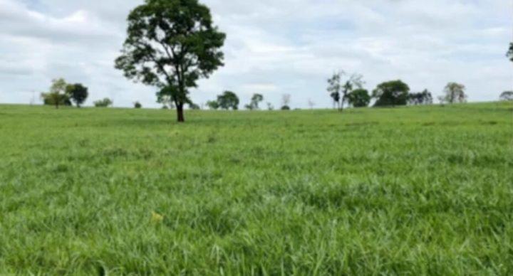 Pecuarista compartilha os segredos da produtividade em terras arenosas